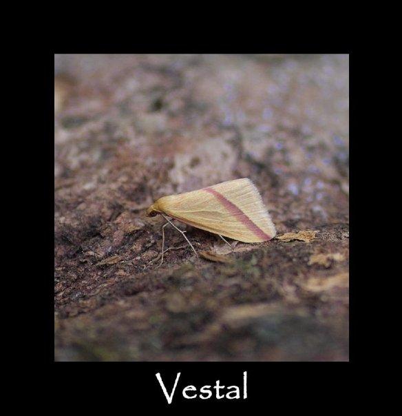 M Vestal 2