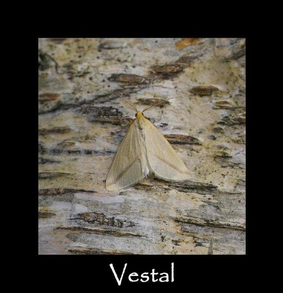 M Vestal