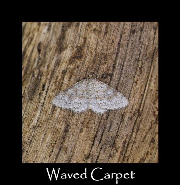 M Waved Carpet