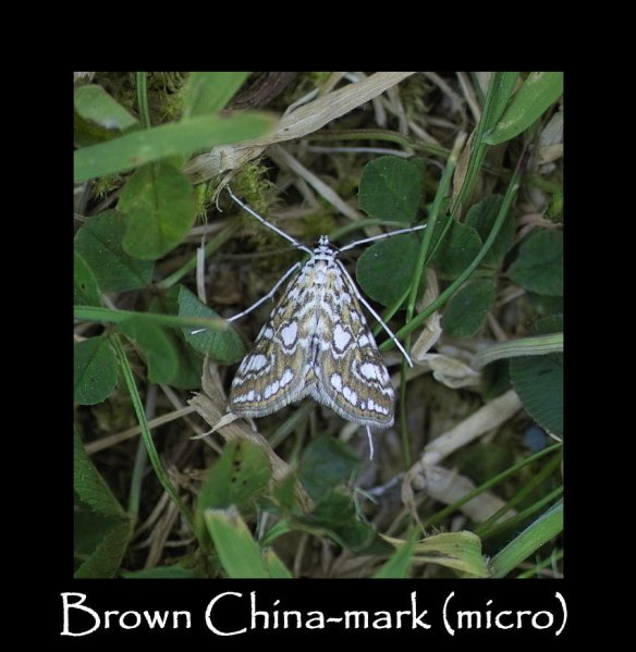 S Brown China-mark (micro)