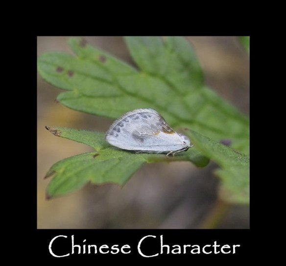 S Chinese Character