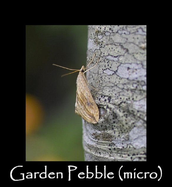 S Garden Pebble (micro) (2)
