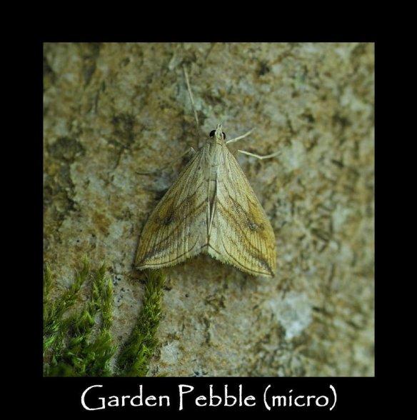 S Garden Pebble (micro)