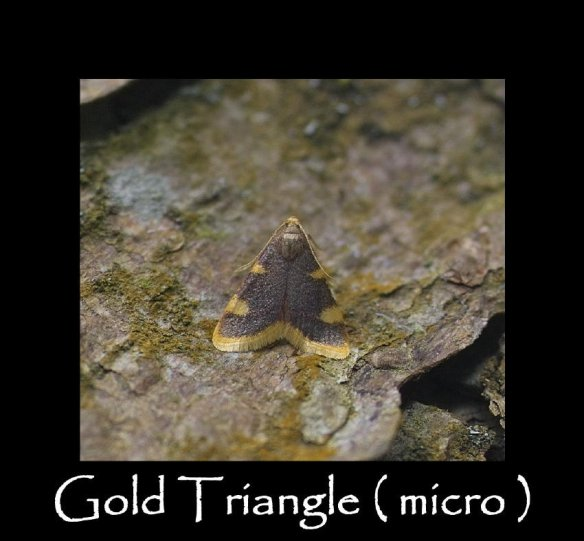 S Gold Triangle ( micro ) (2)