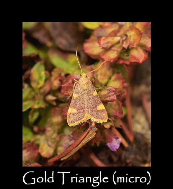 S Gold Triangle (micro)