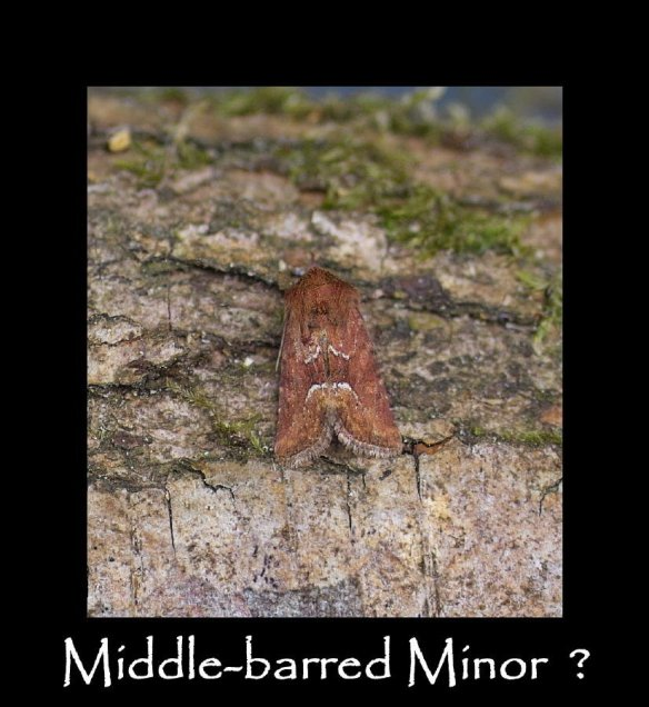 S Middle-barred Minor 5