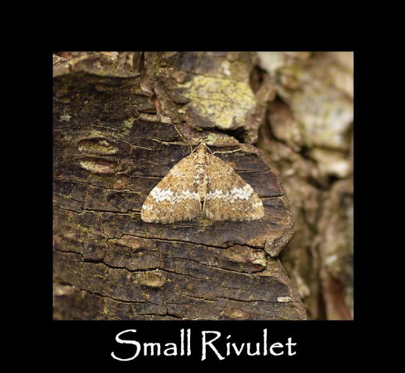 S Small Rivulet (2)