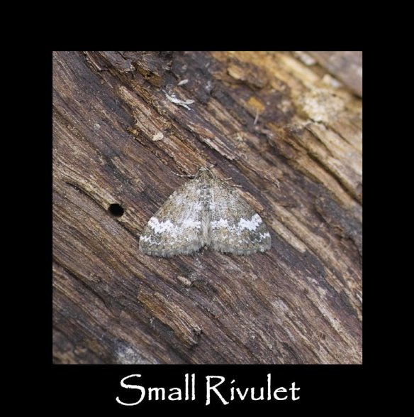 S Small Rivulet