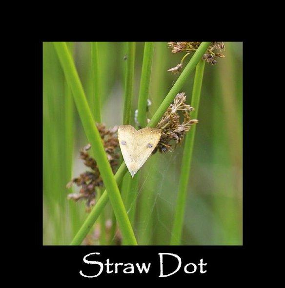 S Straw Dot (2)