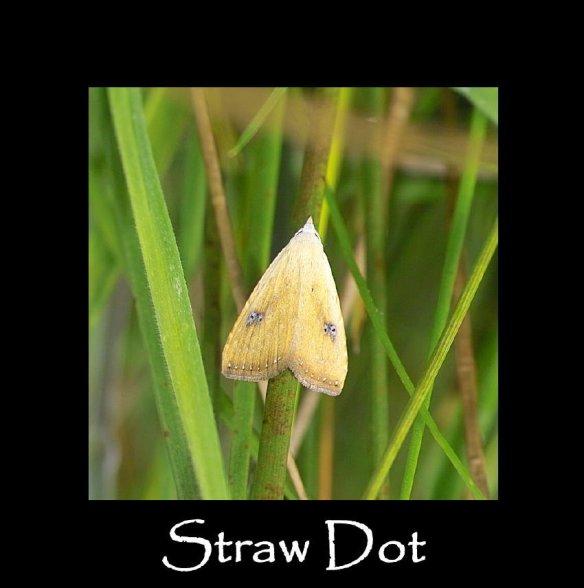 S Straw Dot