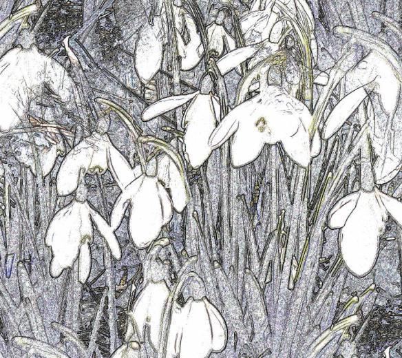 Snowdrops 2a (2)