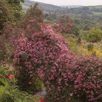 Garden Views-06-June 2016