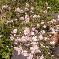 Gelli Uchaf Plant Palette - Late June