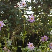Gelli Uchaf Plant Palette - Early July