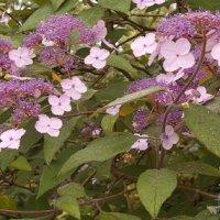 Gelli Uchaf Plant Palette - Late August
