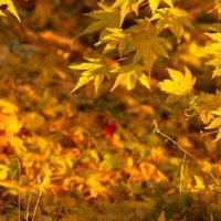Gelli Uchaf Plant Palette - Late November