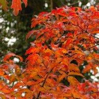 Gelli Uchaf Plant Palette - Early November