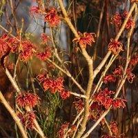 Gelli Uchaf Plant Palette - Late December