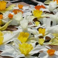 Gelli Uchaf Plant Palette - Late March