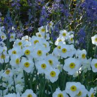 Gelli Uchaf Plant Palette-Late April