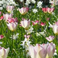 Garden Views-04-April 2019