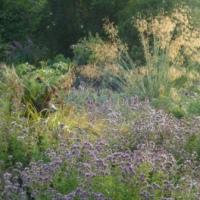 Garden Views-08-August 2019