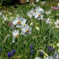 Garden Views-04-April 2020