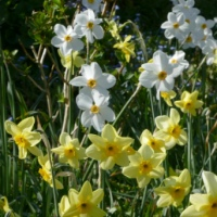 A Coastal Break; Tulips and Daffodils; Molehills and Miners; Water Collectors; and Conflicts of Interest?