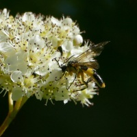 Favourite Insect Friendly Flowers and Plants - June