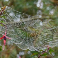 Charming September - Wasps, Webs and Fairies.